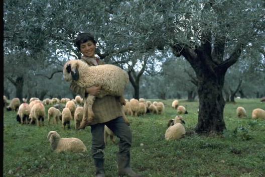 shepherd1.jpg